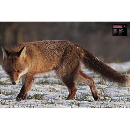 TINTA FOX