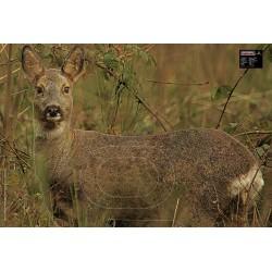 SAUNDERS TARGET FOX