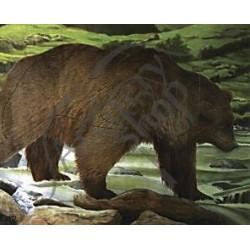 TINTA BEAR